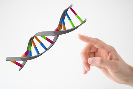 Modell einer DNA-Spindel